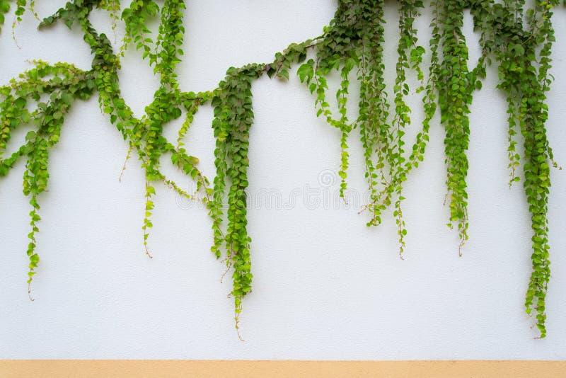 Groene muur, detail stock foto
