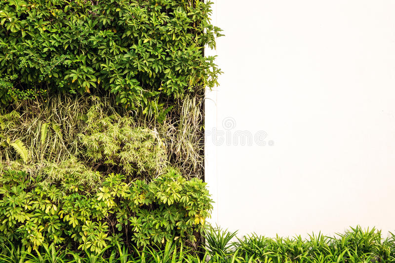 Groene muur met witte muur voor exemplaarruimte stock fotografie