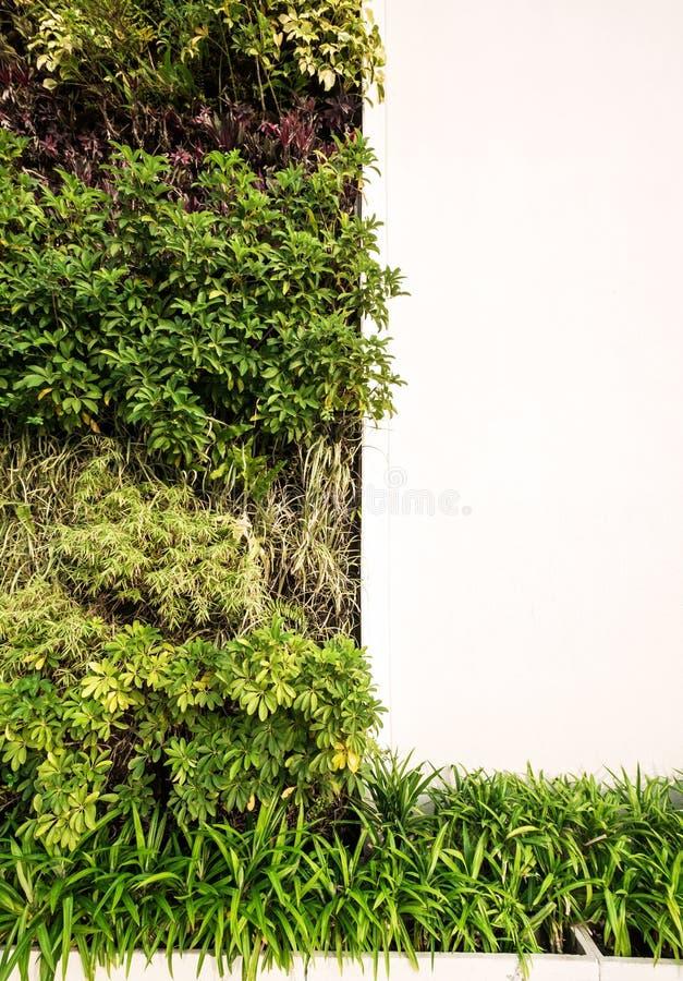 Groene muur met witte muur voor exemplaarruimte royalty-vrije stock afbeeldingen