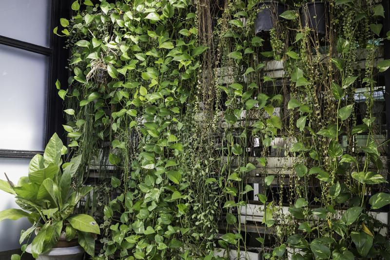 Groene muur van eco vriendschappelijke verticale tuin royalty-vrije stock afbeelding
