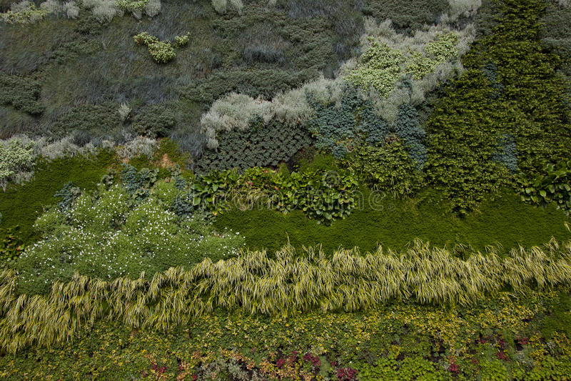 Groene Muur of Verticale Tuin stock foto
