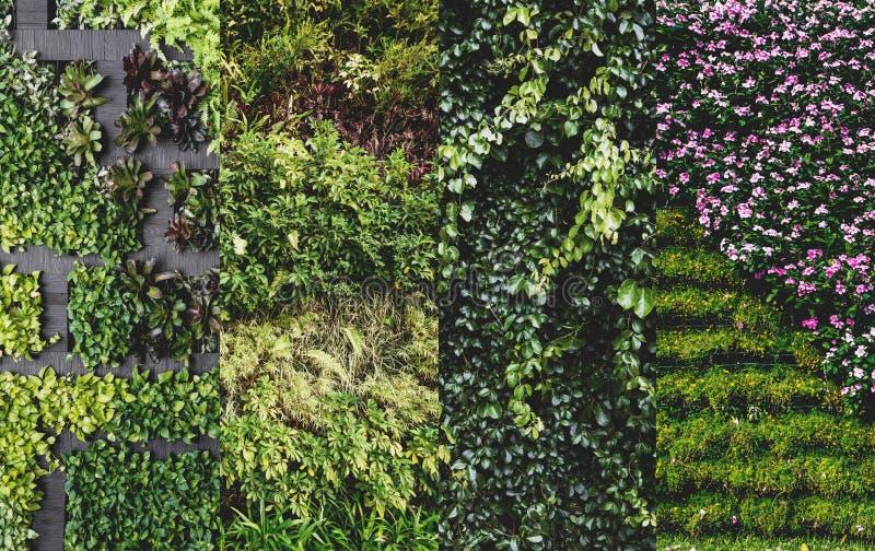 Groene muur, verticale tuin stock afbeelding