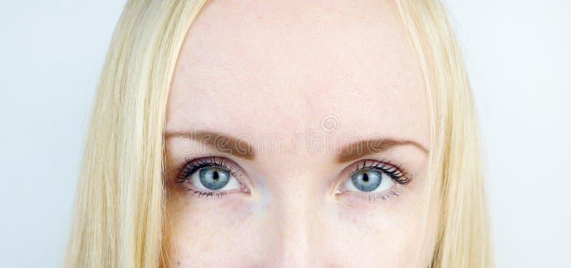 Groene ogen van een mooi meisje Witte achtergrond Blondesproeten royalty-vrije stock afbeelding