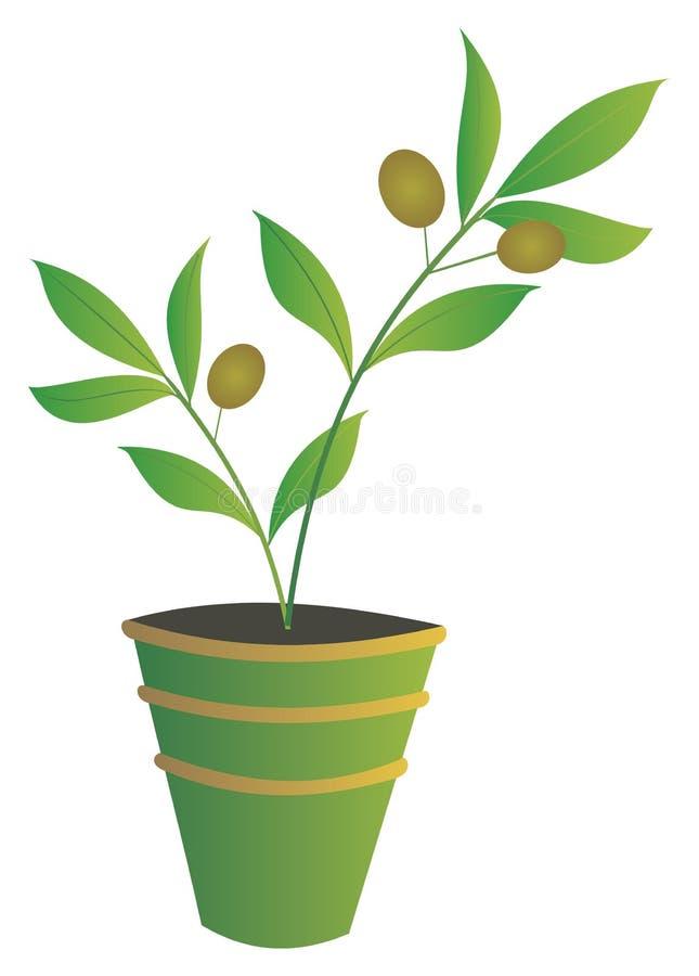 Groene olijf stock illustratie
