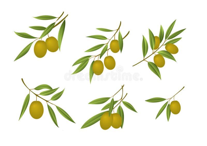 Groene olijven royalty-vrije illustratie