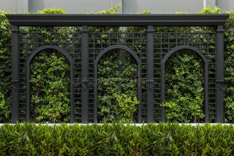 Groene omheiningenmuren, achtergrond van de eco de vriendschappelijke verticale tuin royalty-vrije stock afbeeldingen