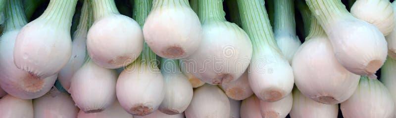Groene onions stock fotografie