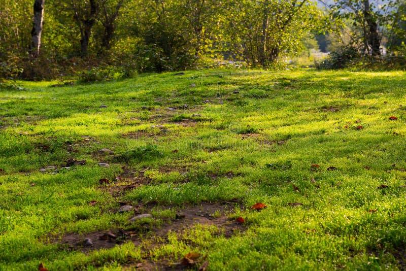 Groene open plek in bos stock afbeelding