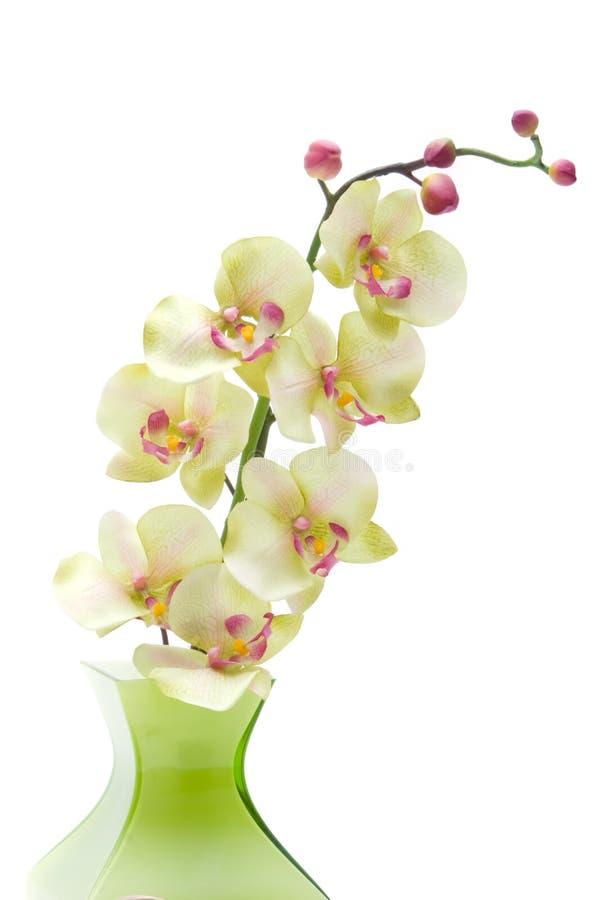 Groene orchideebloem royalty-vrije stock foto