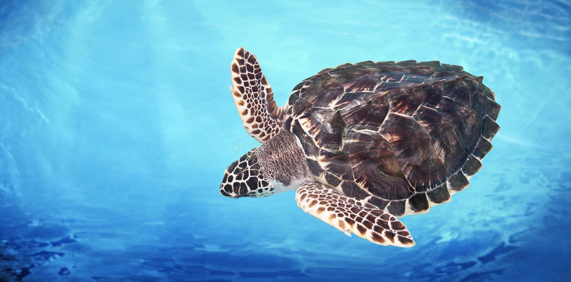 Groene Overzeese Schildpad royalty-vrije stock afbeelding