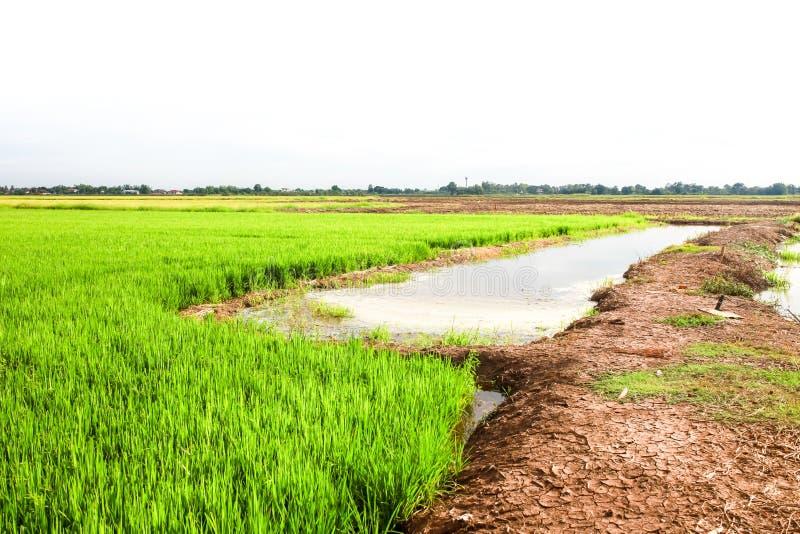 Groene padie met de blauwe hemel in de het glanzen dag royalty-vrije stock afbeeldingen
