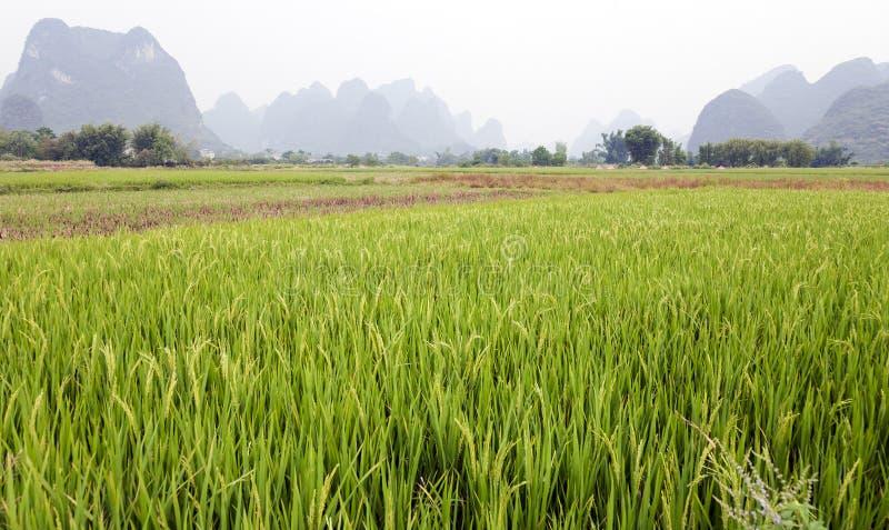 Groene padievelden in Azië royalty-vrije stock foto's