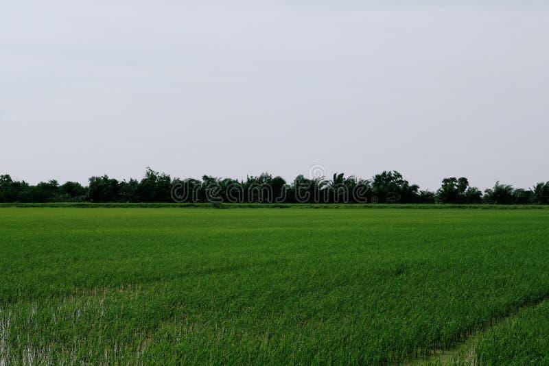 Groene padievelden in platteland van Thailand royalty-vrije stock afbeelding