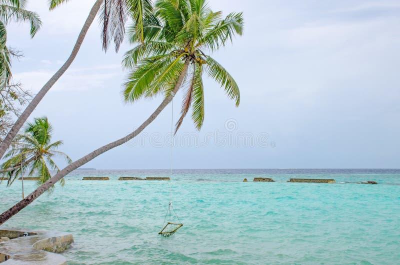Groene palm over water van de Indische Oceaan een mooie landscap stock foto's
