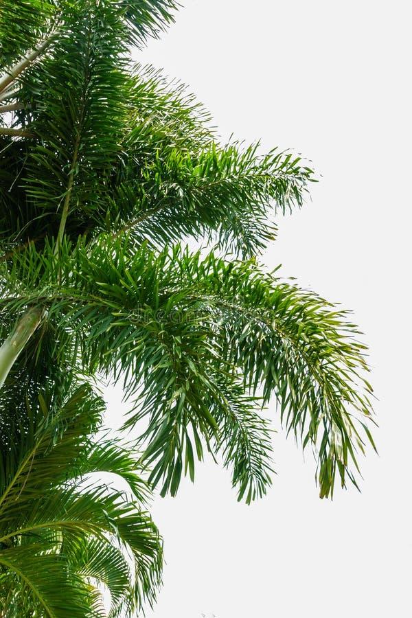 Groene palmbladen royalty-vrije stock foto's