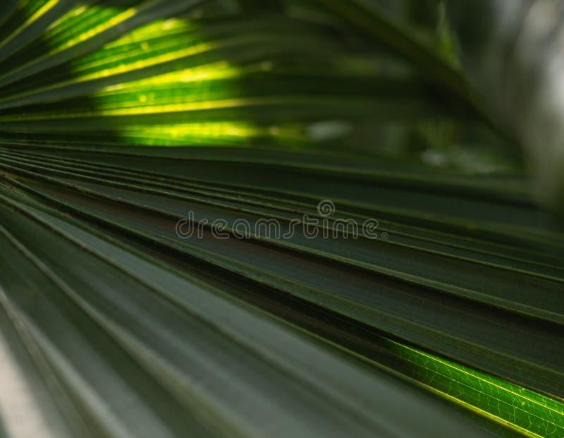 Groene palmbladeren met backlight die door de textuur glanzen royalty-vrije stock foto's