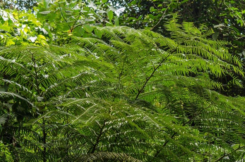 Groene palmen royalty-vrije stock afbeelding