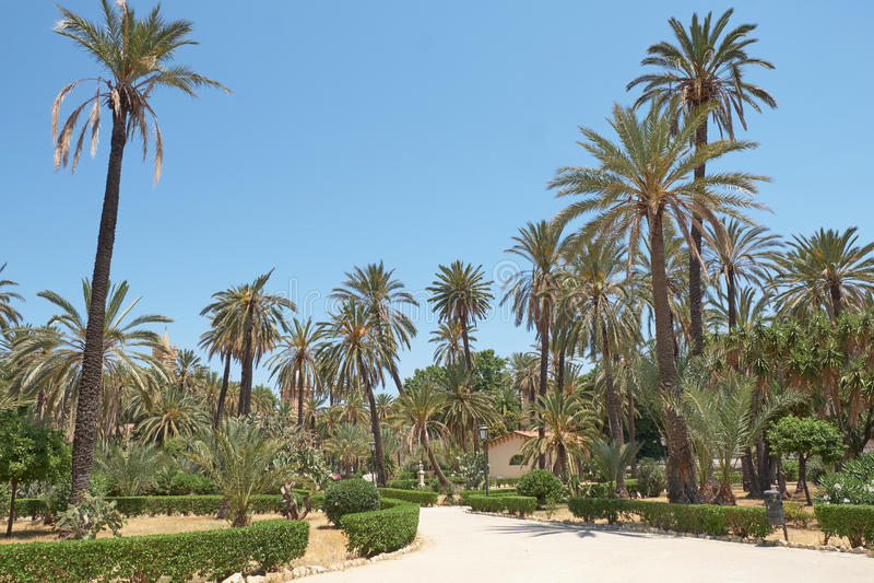 Groene palmen in openbare tuin stock foto's