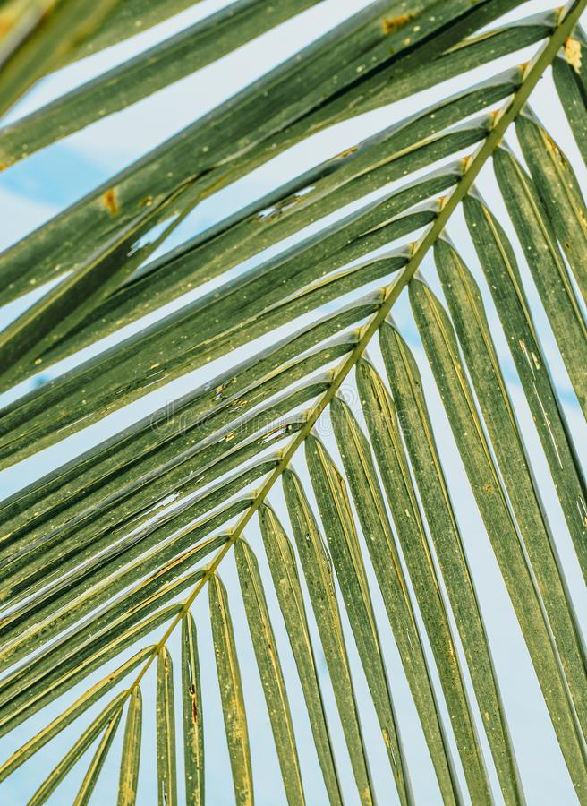 Groene palmtak stock afbeelding