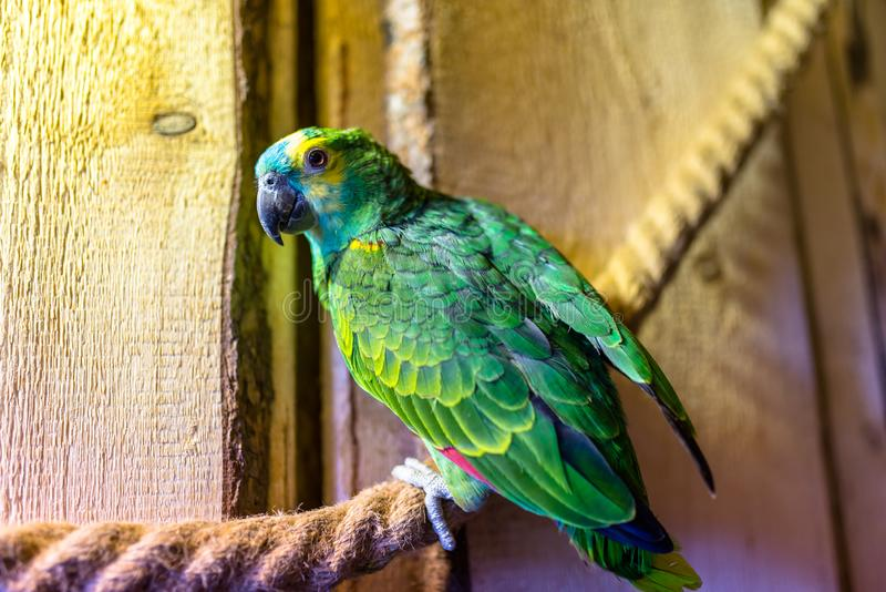 Groene papegaaizitting op een kabel in een ornithologisch park royalty-vrije stock foto's