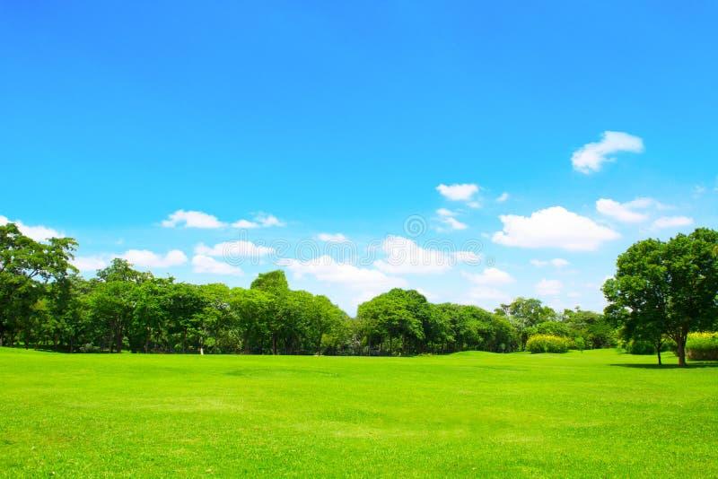 Groene park en boom met blauwe hemel royalty-vrije stock foto's