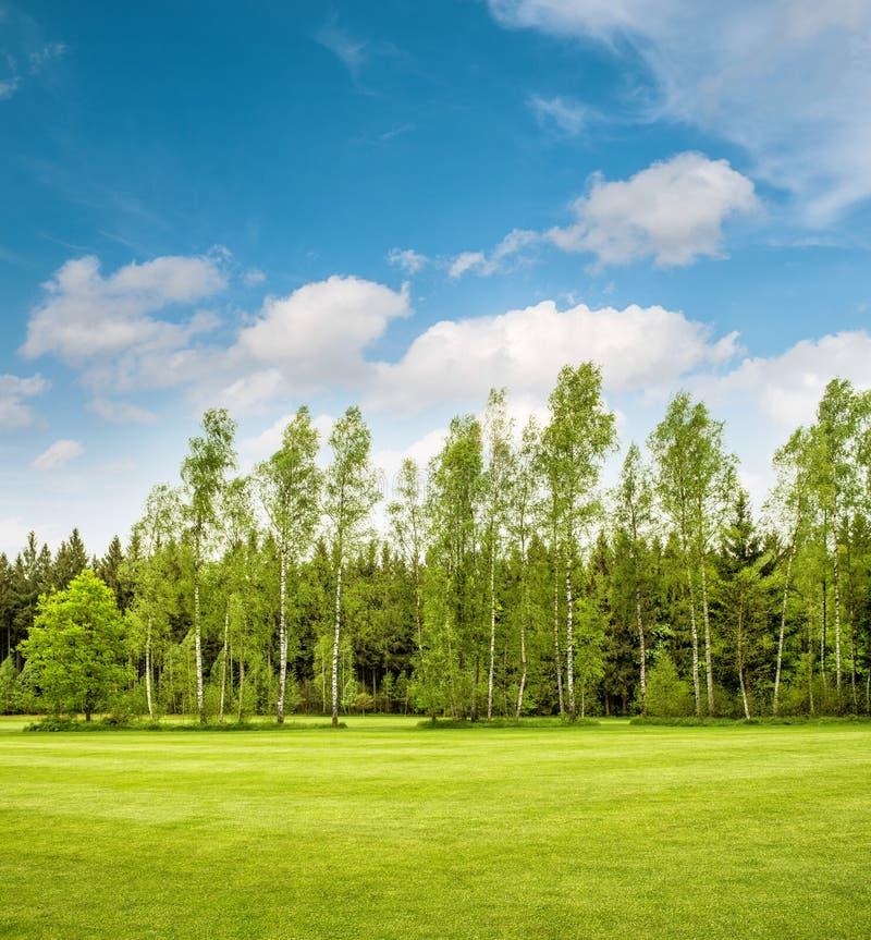 Groene parkbomen over blauwe hemel Het gebied van het de lentegras royalty-vrije stock fotografie