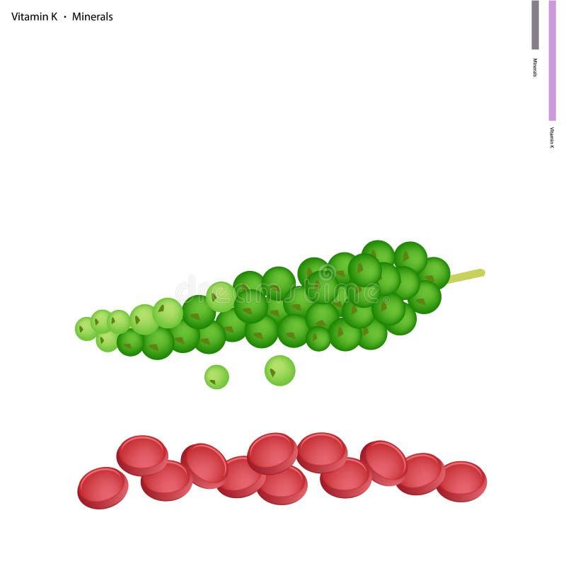 Groene Peperbollen met Vitamine K en Mineralen stock illustratie