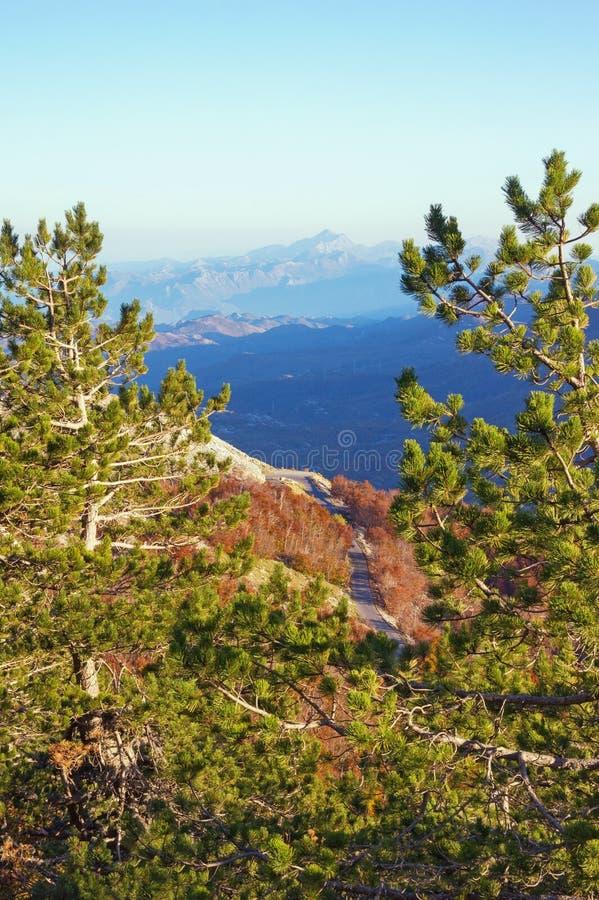 Groene pijnboombomen op een berghelling, het mooie landschap van de de herfstberg Montenegro, mening van het Nationale Park van L royalty-vrije stock foto's