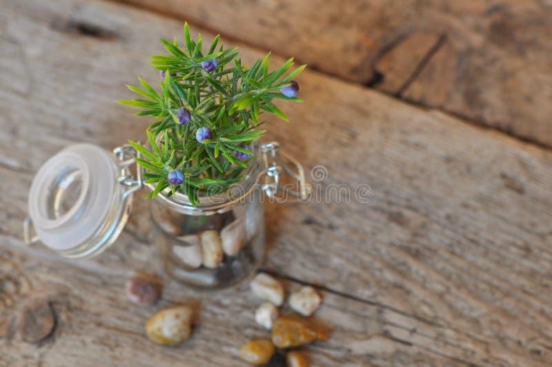 Groene plant op bruine tafel royalty-vrije stock foto's