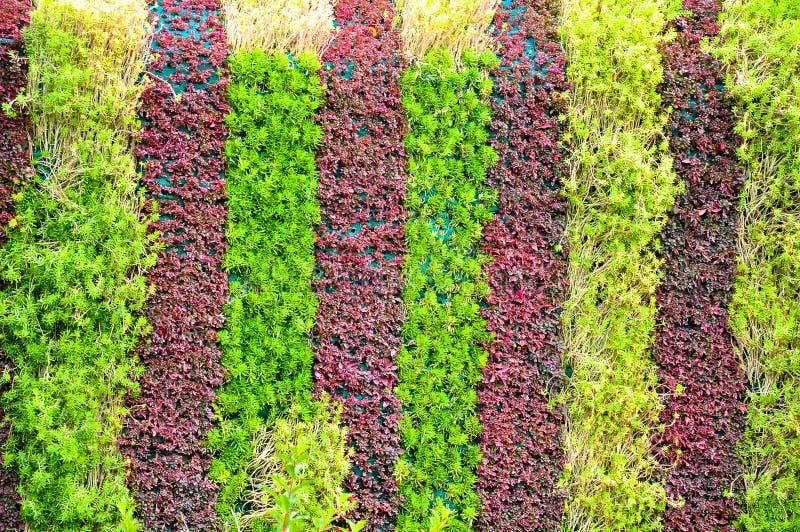 Groene planten aan de muur royalty-vrije stock fotografie