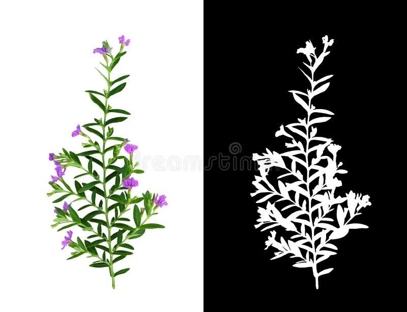 Groene pruik met kleine bladeren en paarse bloemen geïsoleerd op wit en zijn silhouet op zwart royalty-vrije stock fotografie