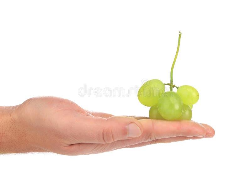 Groene rijpe druiven op hand. stock afbeelding