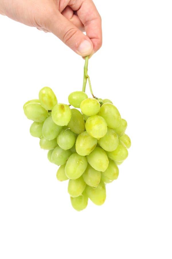 Groene rijpe druiven ter beschikking. royalty-vrije stock foto's