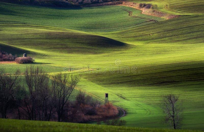Groene rollende heuvels bij zonnige dag royalty-vrije stock fotografie