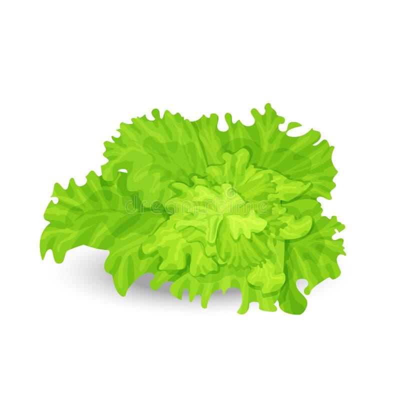 Groene salade royalty-vrije illustratie