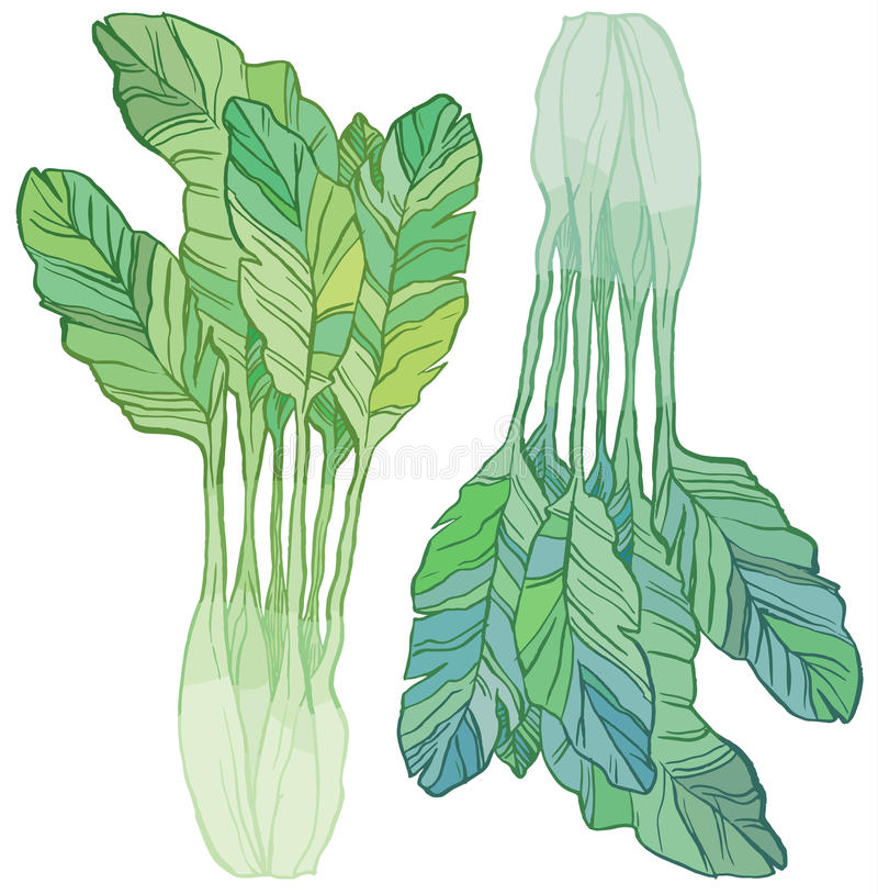 Groene salade stock illustratie