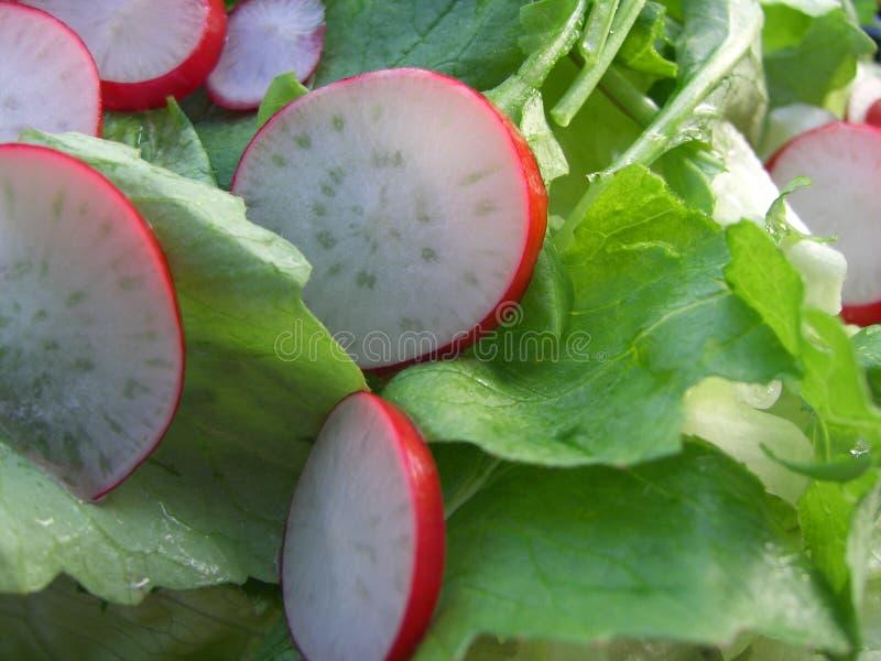 Groene Salade Met Radijs Stock Afbeelding
