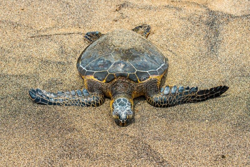 Groene Schildpad bij Kahaluu-Strandpark royalty-vrije stock afbeelding