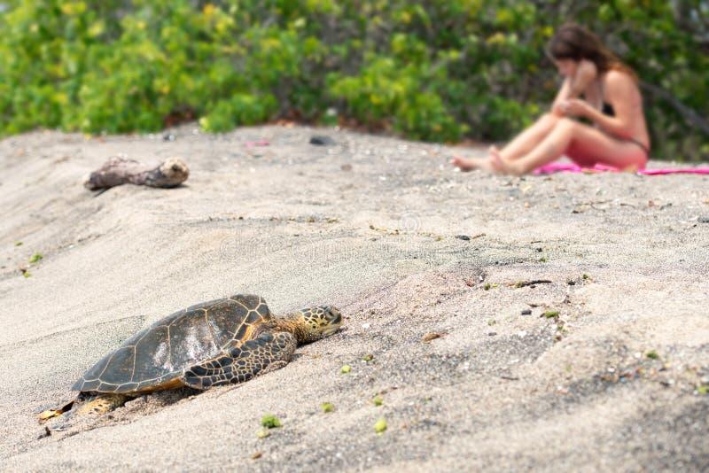Groene Schildpad bij Kahaluu-Strandpark royalty-vrije stock foto's