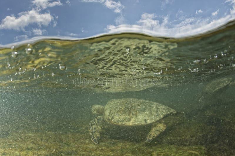 Groene schildpad onderwater dicht omhoog dichtbij de kust stock afbeelding