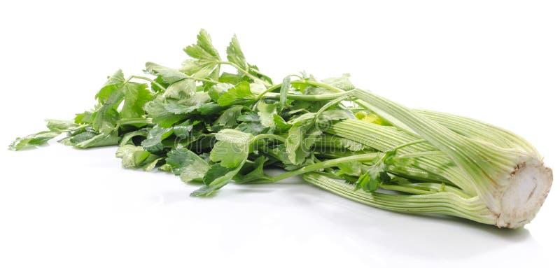 Groene Selderie stock afbeeldingen