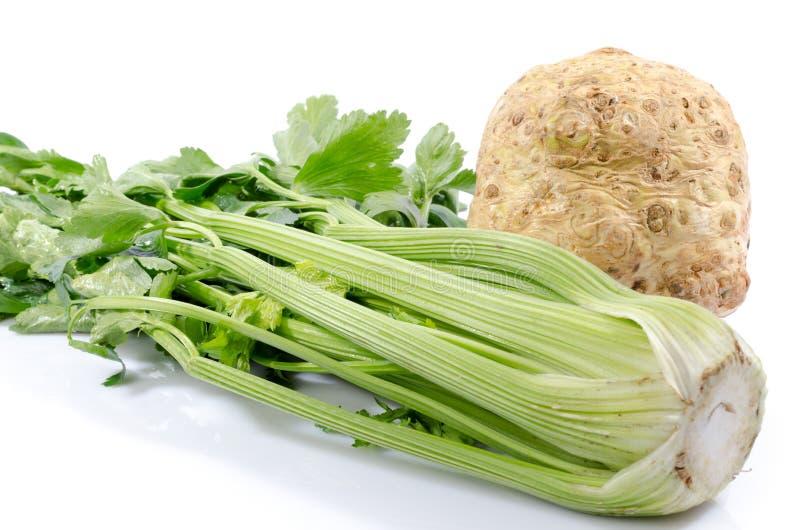 Groene selderie en selderiewortel stock afbeelding