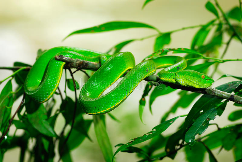 Groene slang in regenwoud stock foto's