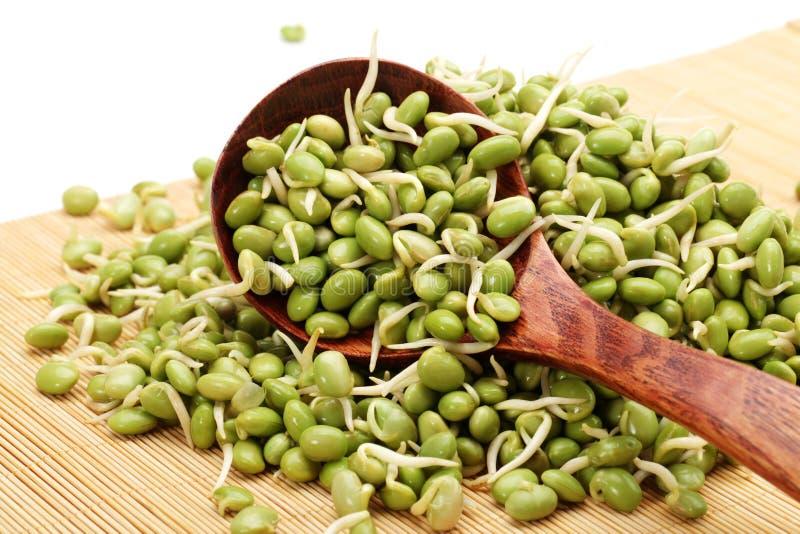 Groene sojaboonspruiten stock afbeeldingen