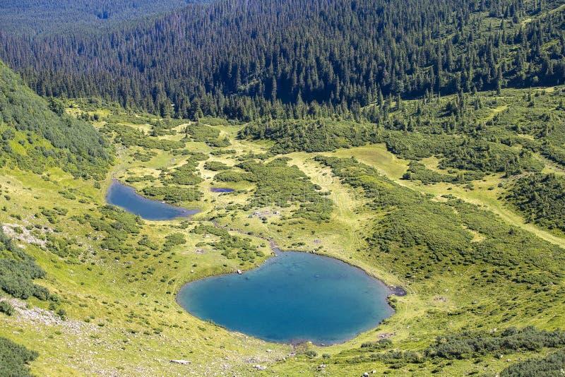Groene sparren en blauw meer tegen de achtergrond van de Karpatische bergen in de zomer, hoogste mening ukraine royalty-vrije stock foto's