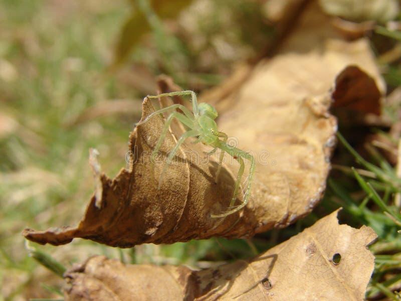 Groene spin op menselijke hand royalty-vrije stock afbeeldingen