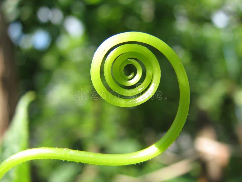 Groene Spiraal stock afbeeldingen