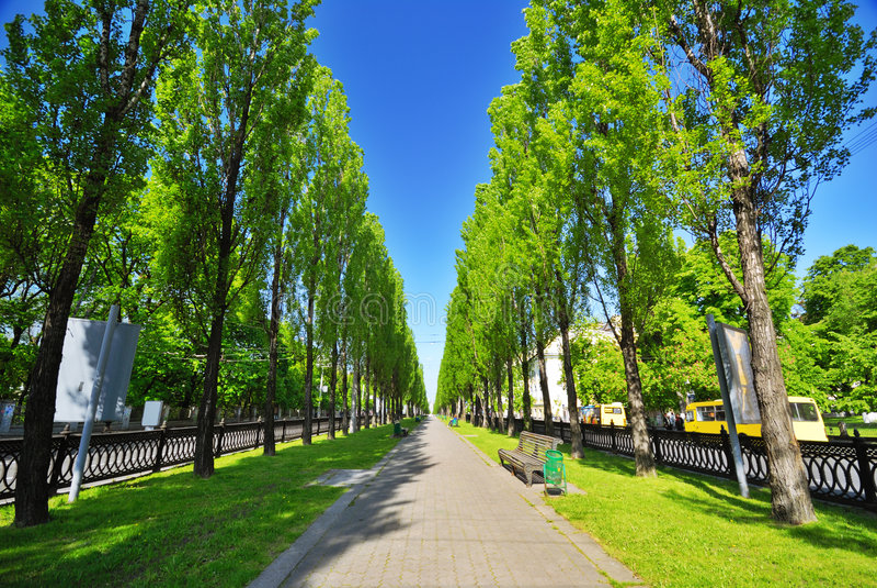 Groene Steeg in Stad royalty-vrije stock afbeelding
