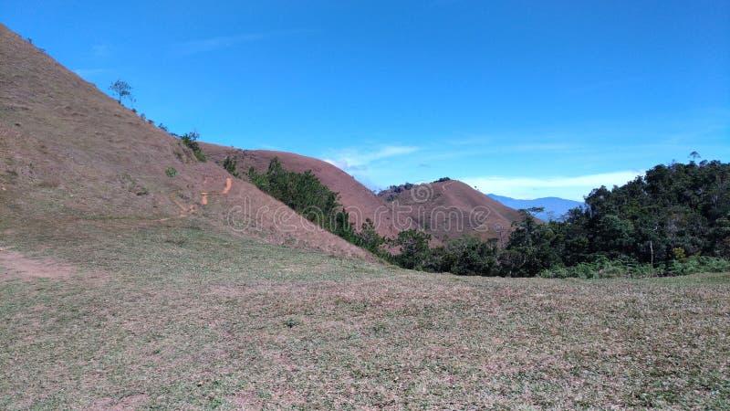 Groene stekel van berg stock foto