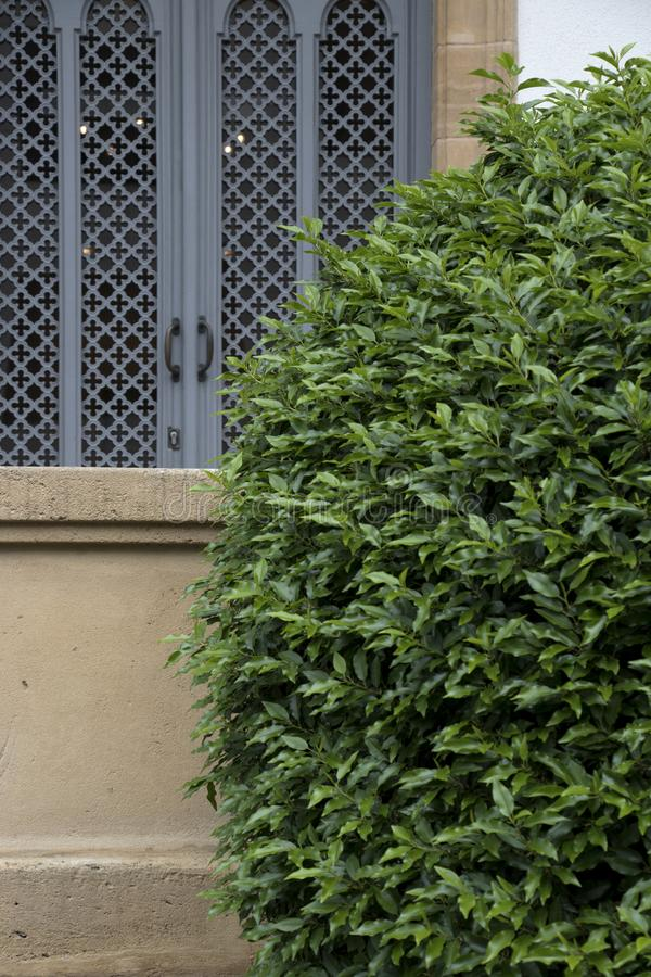 Groene struik dichtbij een venster royalty-vrije stock afbeeldingen